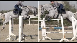 DRESSAGE HORSE TO JUMPER! Silver Can Fly!!