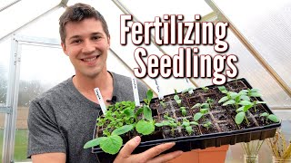 HOW and WHEN you should Fertilize your Vegetable Seedlings 🌿
