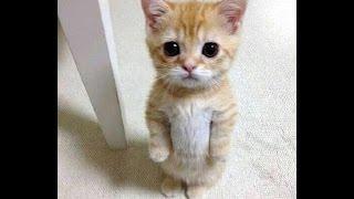 СМЕШНЫЕ КОТЫ ПОД МУЗЫКУ 2017 ЛУЧШИЕ ПРИКОЛЫ С КОТАМИ ПОД МУЗЫКУ 2017 FUNNY CATS Новая подборка #10