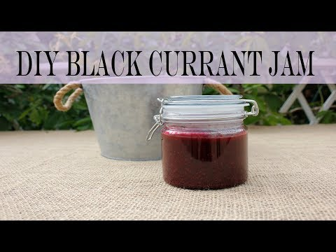 Relaxing video: Picking Black Currant to make Black Currant Jam (DIY Blackcurrant Jam)