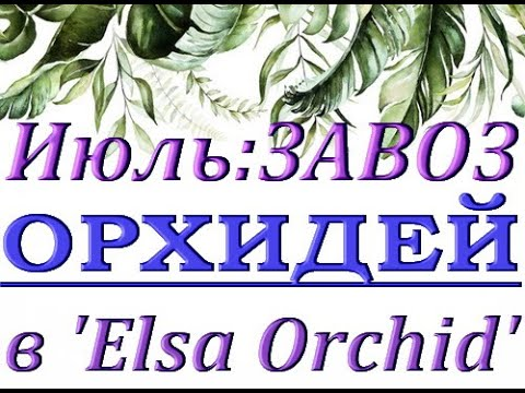 ЗАВОЗ чудесных ОРХИДЕЙ в 'Elsa Orchid',июль,2021.ОРХИДЕИ ПОЧТОЙ,Самара,ссылки - в описании.