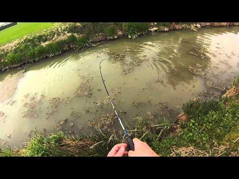 Il makukha per pescare di una carpa