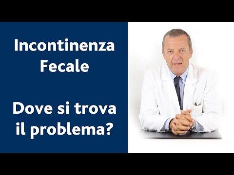 La prostata e vescicole seminali