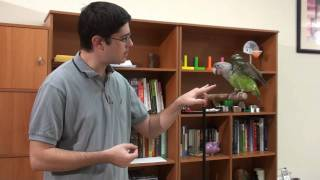 How to Train Parrot Big Eagle Show Wings Trick