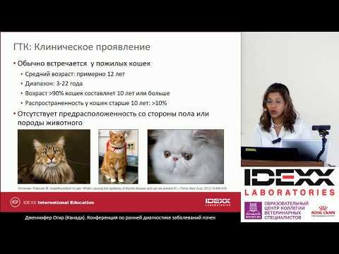 """3 - Jennifer Ogeer - """"Диагностика и лечение заболеваний почек у кошек с гипертиреозом""""."""
