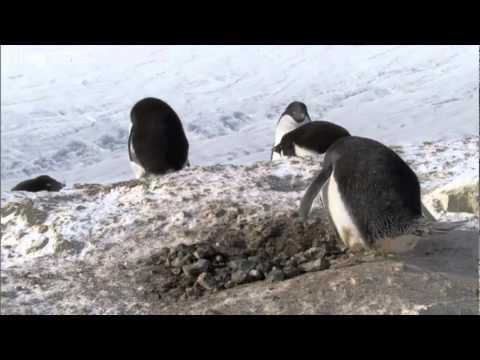 The Penguin Master Criminal - Funny!