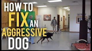 Fearful Dog Aggression Training and Rehabilitation with America's Canine Educator