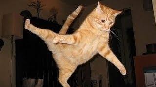 「猫かわいい」 すごくかわいい子猫 - 最も面白い猫の映画 #258