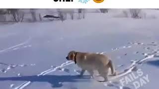 Видео Приколы Юмор Фэйлы Смех Ржака Fail Funny Vines 2159