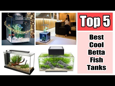 The Top 5 Best Cool Betta Fish Tanks Reviews