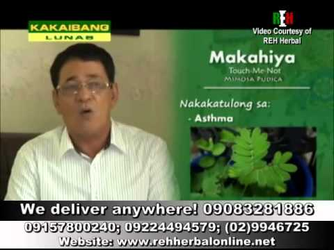 Video King's Herbal Testimonial - Herbal Tips ni Ka Rey Herrera (Makahiya)