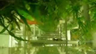 dew pond, planos rotos