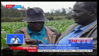 Several counties among them Migori now bear onslaught of armyworms pests