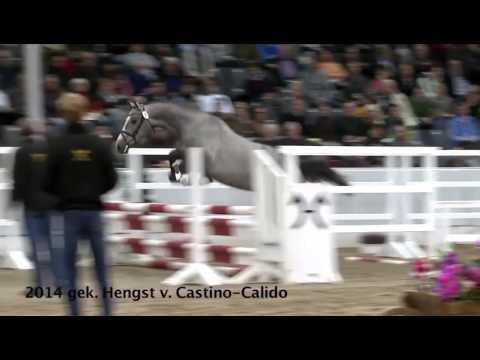 Video Vorschau von Castino