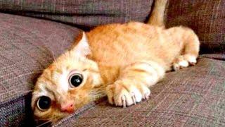 Приколы с Котами - Смешные коты и кошки . Приколы с животными!