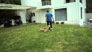 preview picture of video 'Country Club Canino'
