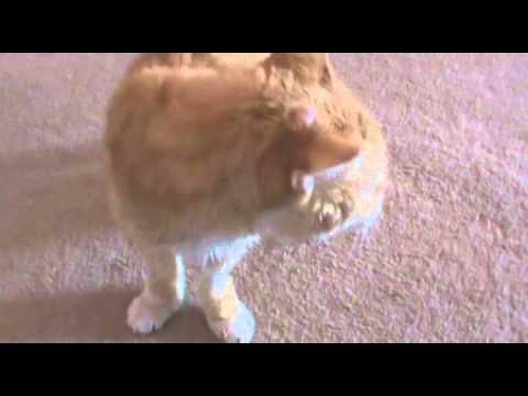 Catnip Mouse Video.wmv
