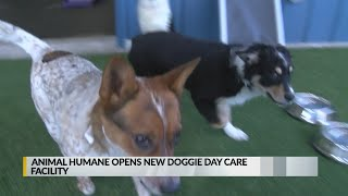 Animal Humane Opens New Boarding And Doggie Daycare Facility