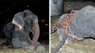 Słoń popłakał się, gdy uwolniono go po 50-latach niewoli