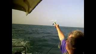 preview picture of video 'Richards Bay feeding a Sea Bird.3GP'