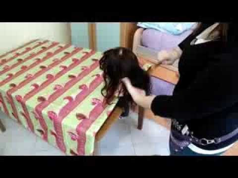 Betulla di catrame dentro da emorroidi