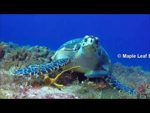Diving with Maple Leaf Scuba's diveshop in Cozumel, Mexico