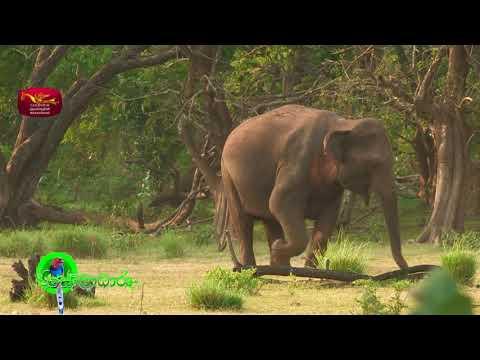 Sobadhara - සොබාධාරා | Season 2 | Episode - 18 | 2018-05-11 | Rupavahini Documentary