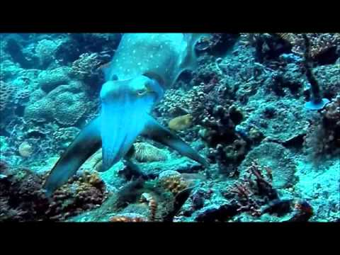 Cuttlefish Hypnotise Their Prey Performing These Trippy Light Shows