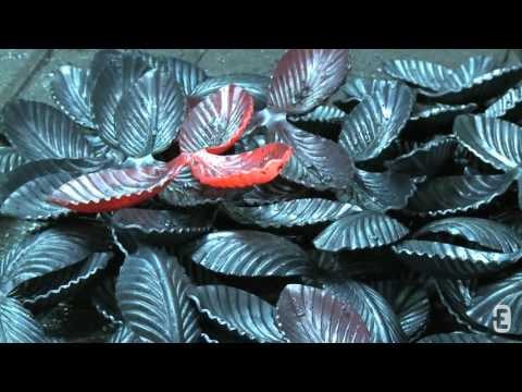 Kowale roślin