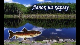 На что влияет карма в рыбалке