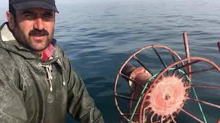 Balık zamanı