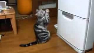 Очень голодный кот.mp4