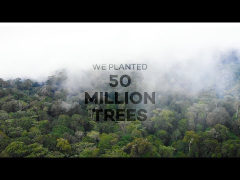 How 50 million trees have changed the world