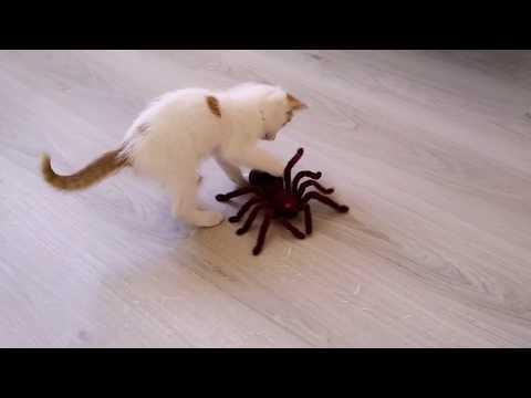 Kitty Reaction To A Giant Spider | Kitten VS Spider