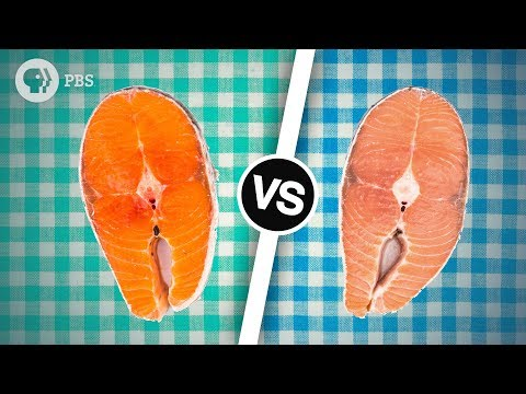 Wild Salmon or Farmed Salmon? Which is Better?   Serving Up Science