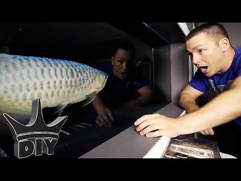 I BOUGHT NEW FISH!! - Arowana gets tank mates