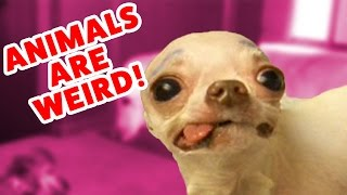 Top Weird Pets & Animals Compilation of 2016 | Funny Pet Videos