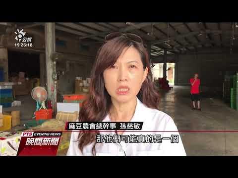 麻豆水圳堆積大量爛掉文旦 清理近2公噸 20190907 公視晚間新聞