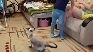 Дерзкая кошка!