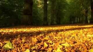 Mùa Thu Chết - Ngọc Lan (sáng tác: Phạm Duy, phỏng theo bài thơ L'Adieu của Guillaume Apollinaire)