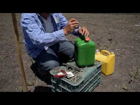 Instalación de trampas con feromonas para gusano cogollero