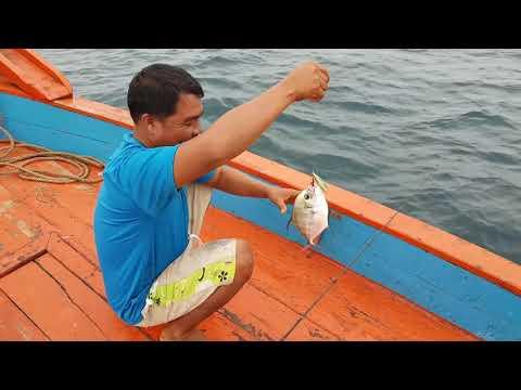 ปรสิตปลา Multiped