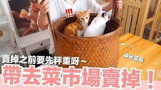 貓咪來量體重啦~準備過冬要長肉肉啦!【好味貓日常】EP23