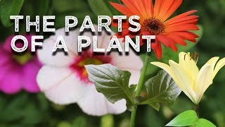 The Parts of a Plant (song for kids about flower/stem/leaves/roots)