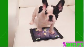 CAT and DOG Playing On iPads Compilation