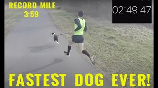 World Record Mile with Dog 3:59 featuring the amazing Bailey Rose and Olympian, Anthony Famiglietti