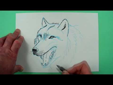Wie zeichnet man einen Wolf ? Zeichnen für Kinder... und jedem, dem es Spaß macht.