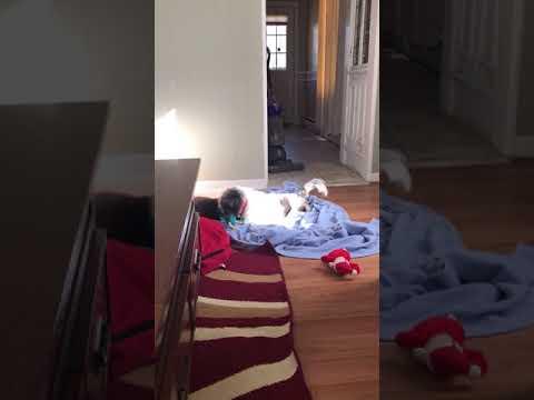Khloe, an adopted Shih Tzu & Terrier Mix in Shrewsbury, MA