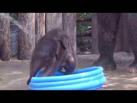 Momento tierno con el pequeño elefante