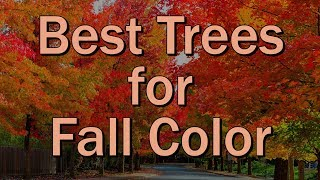 Best Trees For Fall Color – Family Plot